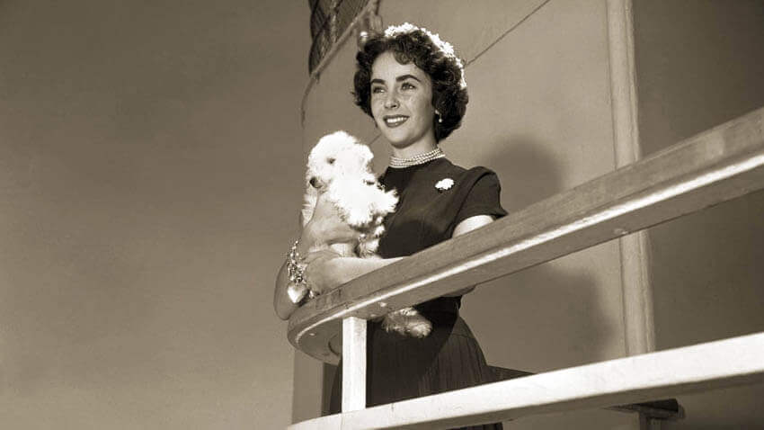 Elizabeth Taylor and her dog on a cruise