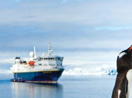 44581-lindblad-expeditions-national-geographic-explorer-gentoo-penguins-antarctica