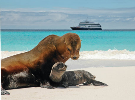 Sea lion and pup in Galapagos Islands. National Geographic Islander in background