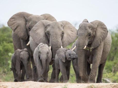 elephant-1200x801