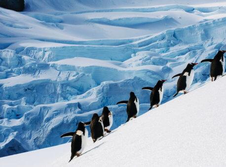 silversea-antarctica