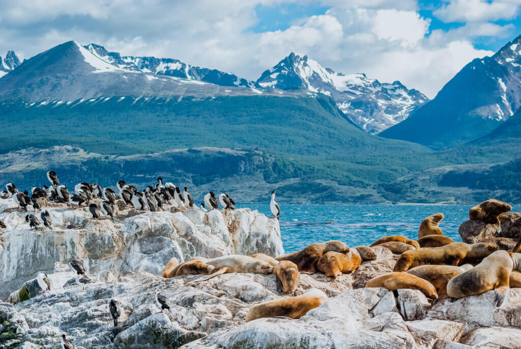 Sea Lion of the Beagle Channel Ushuaia