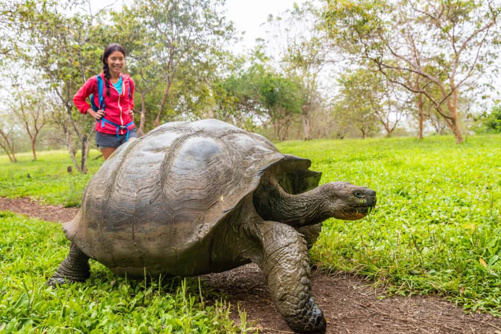 Expedition Cruise: Galapagos Giant Tortoise and tourist woman on Santa Cruz Island Galapagos