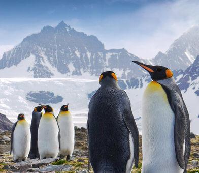 Antarctica-South-Georgia