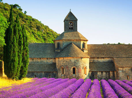 Europe-France-Lavender