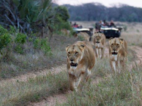LION-SAFARI-DRIVE