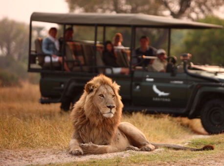 Male-Lion-in-a-typical-scene-on-a-game-drive