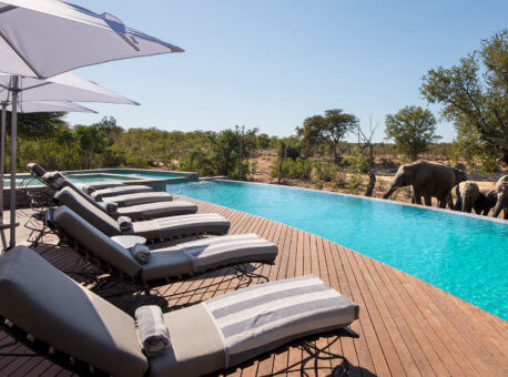 swimming-pool-with-elephants-at-luxury-andbeyond-ngala-safari-lodge-close-to-kruger-national-park-in-south-africa